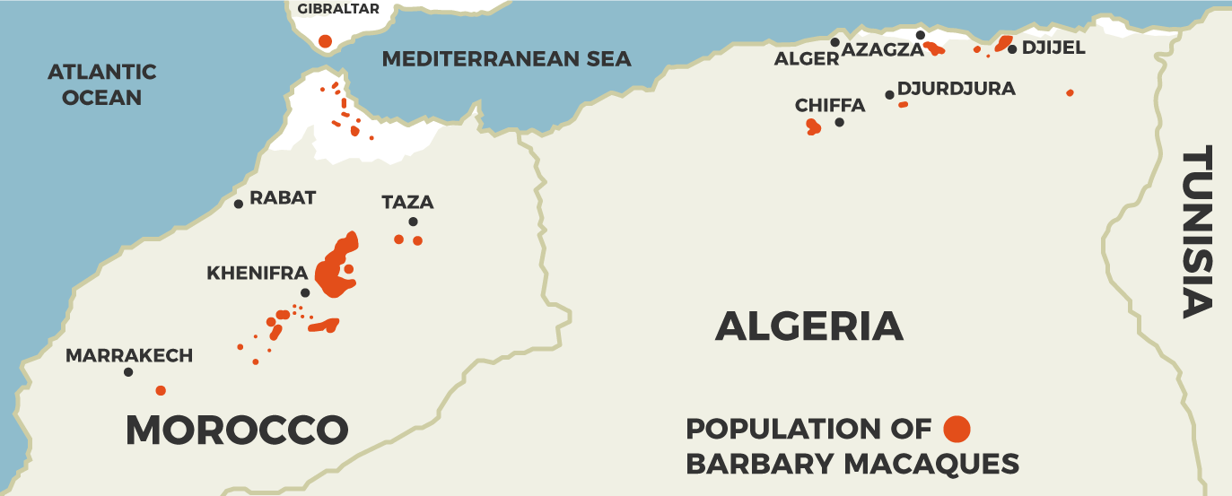 population of Barbary macaques